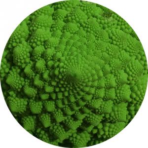 fractale-fibonacci-chou-romanesko